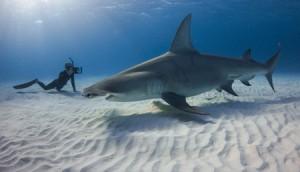 Copied from Realscreen - Bahama Blue (Photo: Grant Johnson)