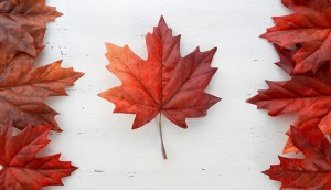 shutterstock_maple leaf canada