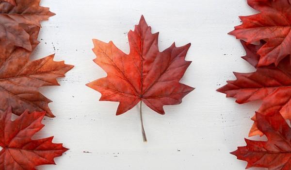 shutterstock_maple leaf canada