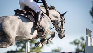 shutterstock_horse