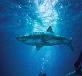 sharkwater 2