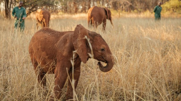 endlings-elephant-01