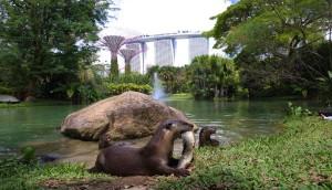 Otter Dynasty